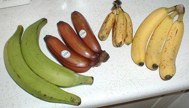 Important Benefits of Banana