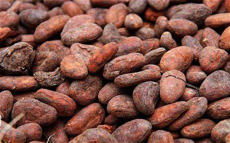 Steps in Cultivating Cocoa