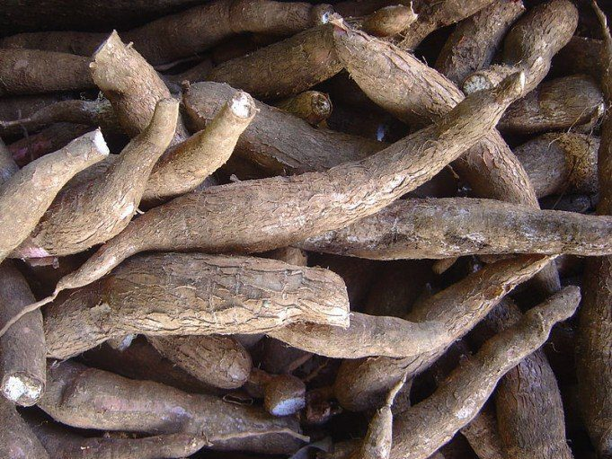 Economic Importance of Cassava Production in Nigeria