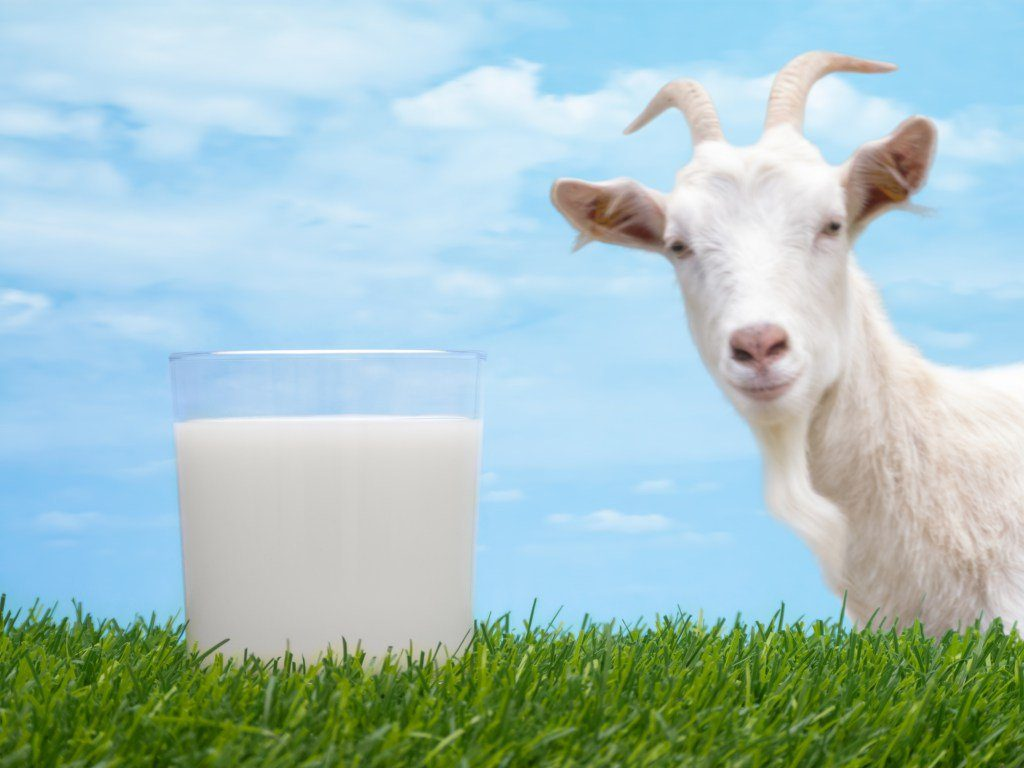 Would you like some Goat Milk?