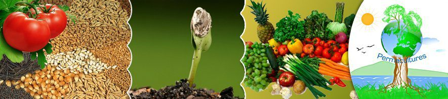 DIY-Agric Store